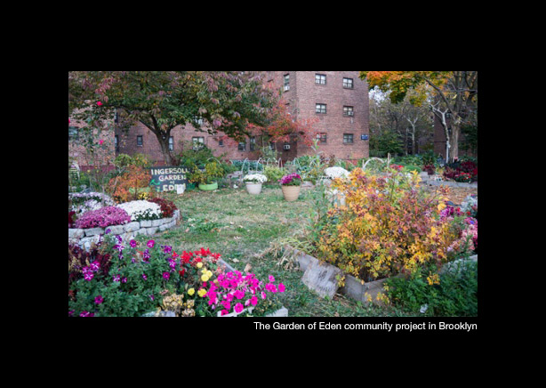 New York Success Story Growing The Garden Of Eden In Brooklyn